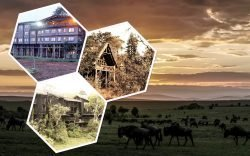 Staying in a Tree House Hotel in Kenya can easily be one of the most memorable experience you can ever have. In this article, we explore 3 of the best; Treetops Hotel in Nyeri, Ndovu Bonde in Shimba and Ngong house in Nairobi.