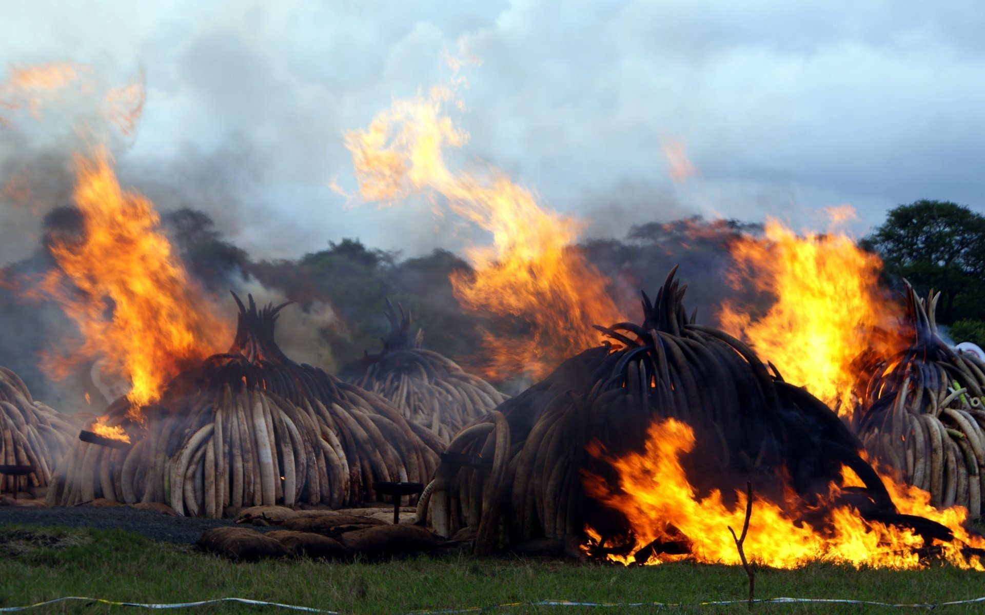 I always felt it would take elephantine steps to save the elephant from extinction. That may just happen as Kenya prepares to burn 105 tons of ivory.
