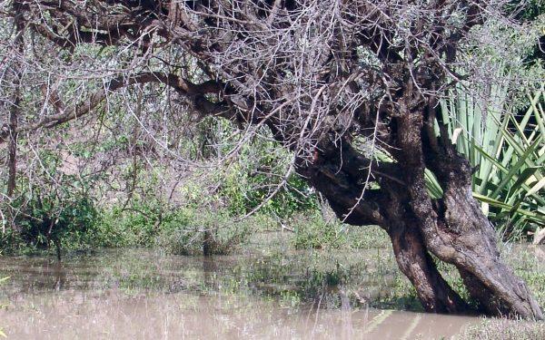 NEMA warns land owners to keep-off wetlands