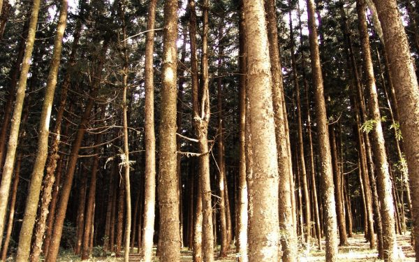 Kenya prepares to celebrate first World Forest Day.