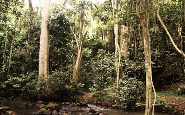 Kenya needs to have 10% forest cover by 2030
