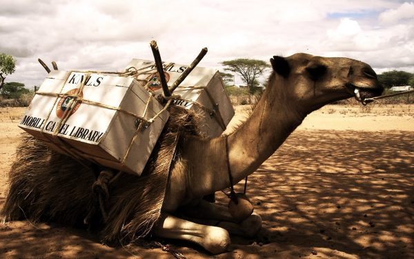 Meet Northern Kenya's Mobile Camel Library