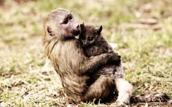Baboon adopts bushbaby at orphanage