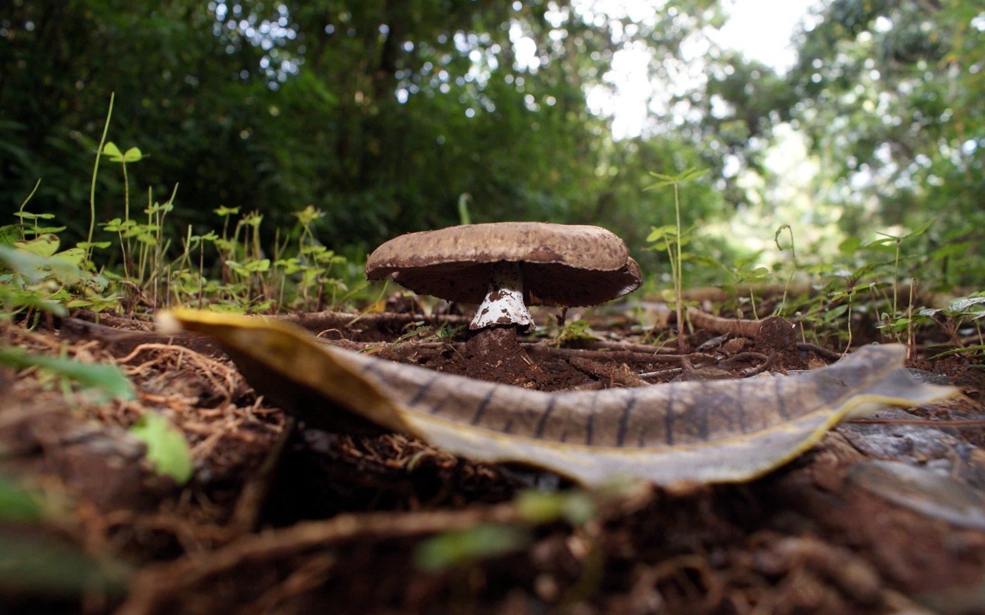 Mushrooms Growing in Brakenhurst Forest