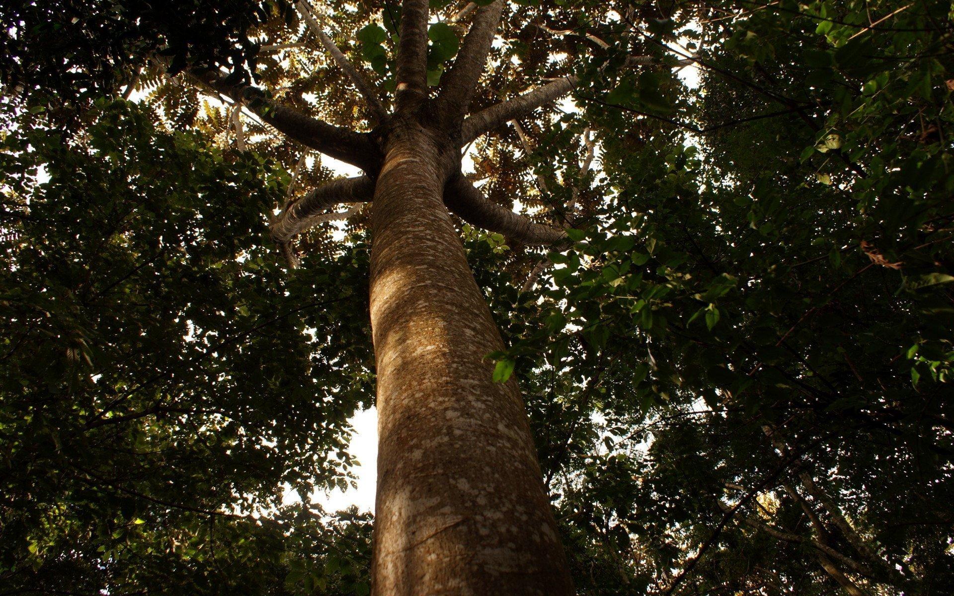 Indigenous Tree at Brakenhurst