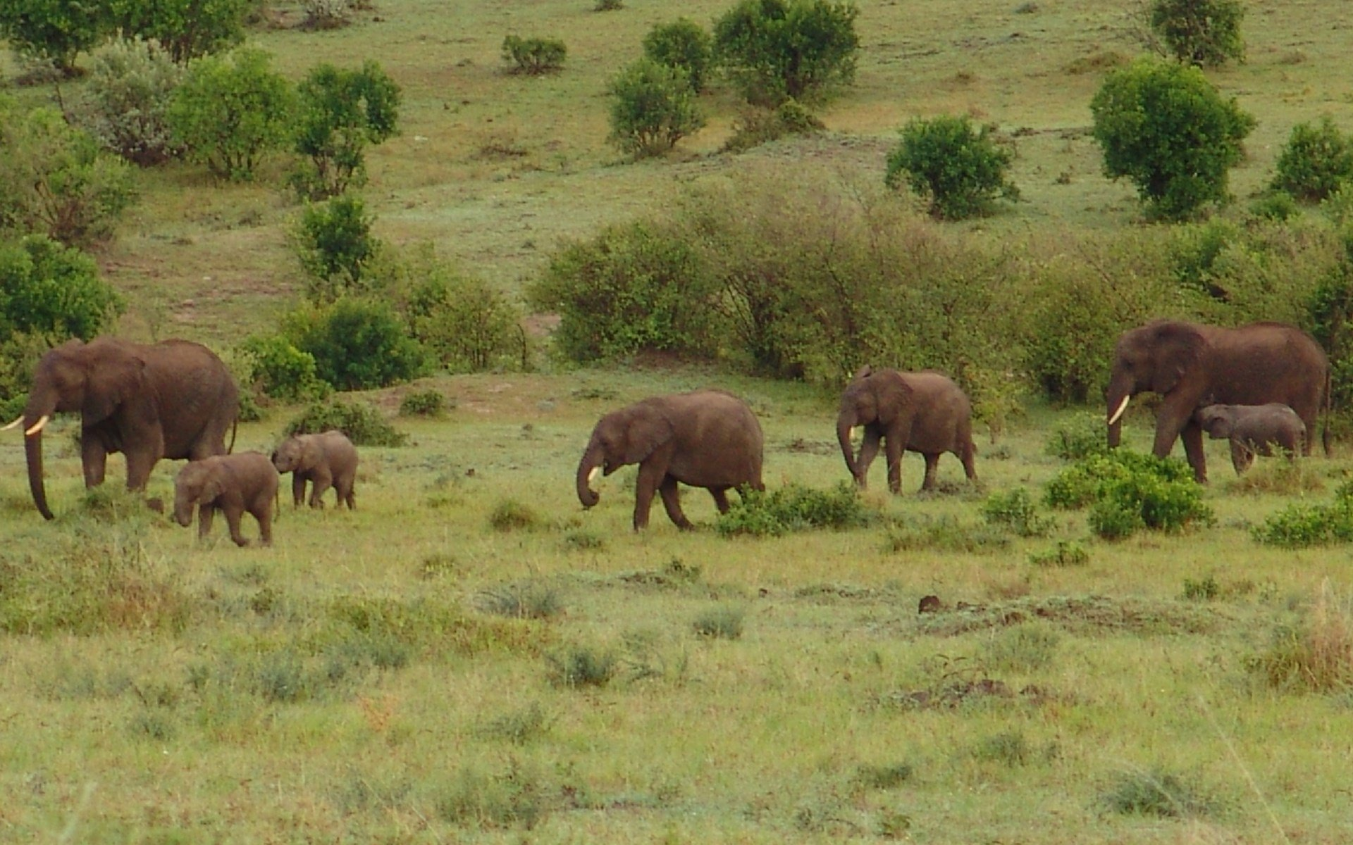 So much has already been said about Elephants, but when I came across these little-known facts, they fascinated me and so I have shared.