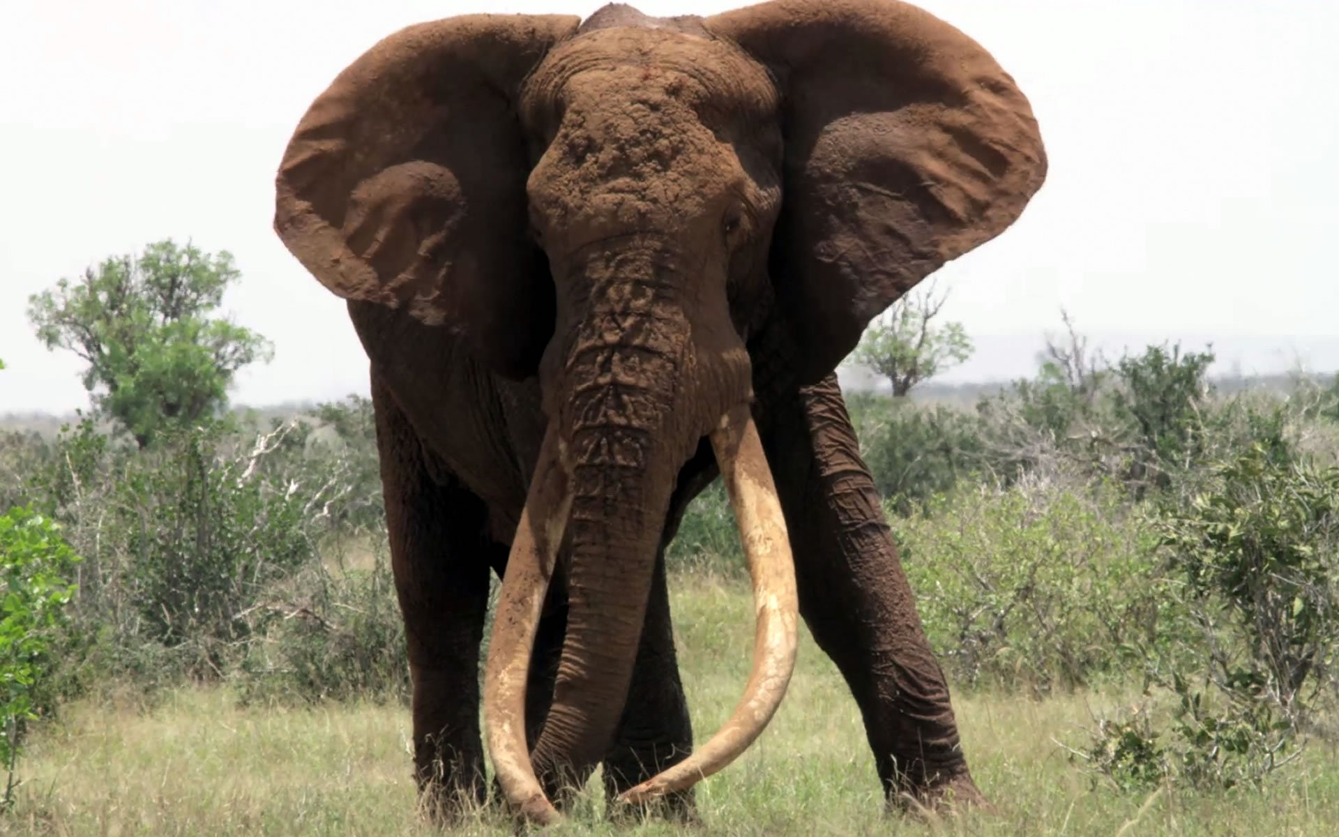 Today the world has risen to the shocking news of the death of Satao, one of an iconic rare breed of elephants known as tuskers due to their large tusks.