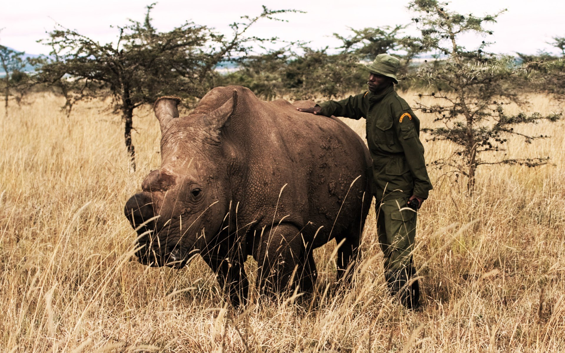 The last hope for the world's most endangered mammal, the northern white rhino, now rests on artificial reproduction, experts have said.