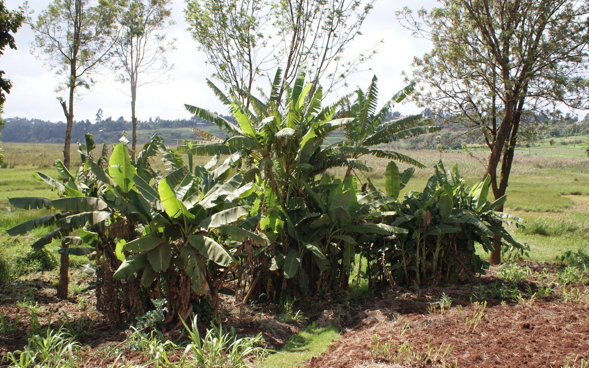 How farmers are encroaching into Ondiri Swamp.