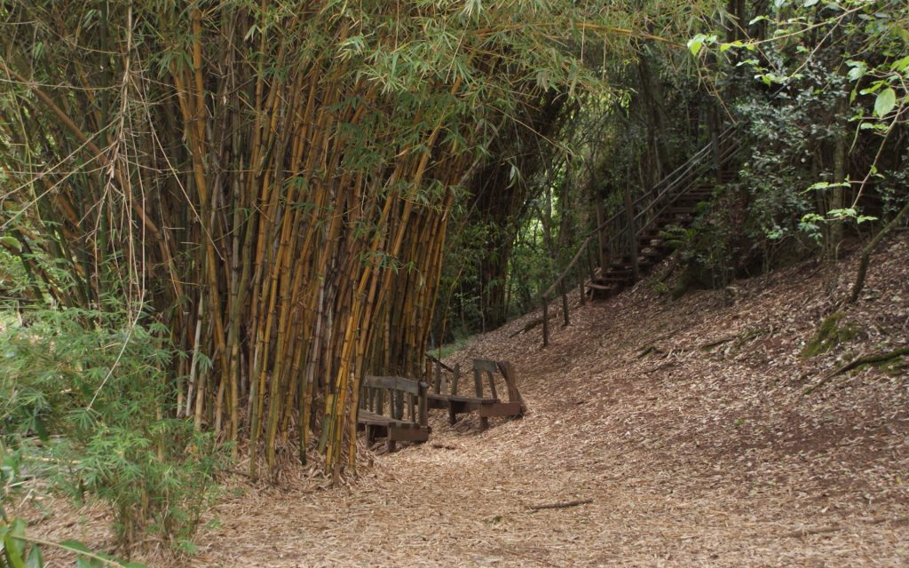 The Bamboo Rest Point at Oloolua is a sheer gathering of this fascinating grass.