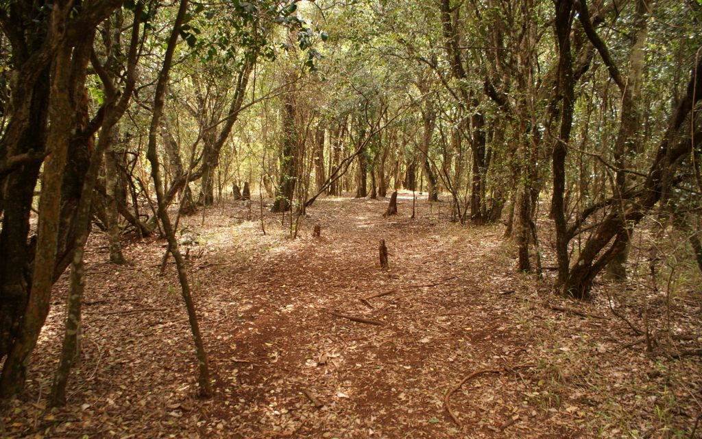 The little-known Oloolua Nature Trail offers the traveller a place that is away from the hustle and bustle of Nairobi city yet near enough to afford a spontaneous decision to visit.