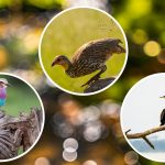 Did you know there are 68 Important Bird Areas (IBAs) in Kenya? They are home to over one thousand birds and here are 10 places you can see them.