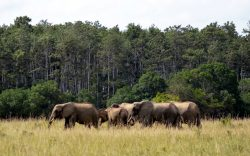 Shimba Hills Reserve consists of beautiful, lush scenery which would appeal to those wishing to take a break from the beach to view terrestrial wildlife.