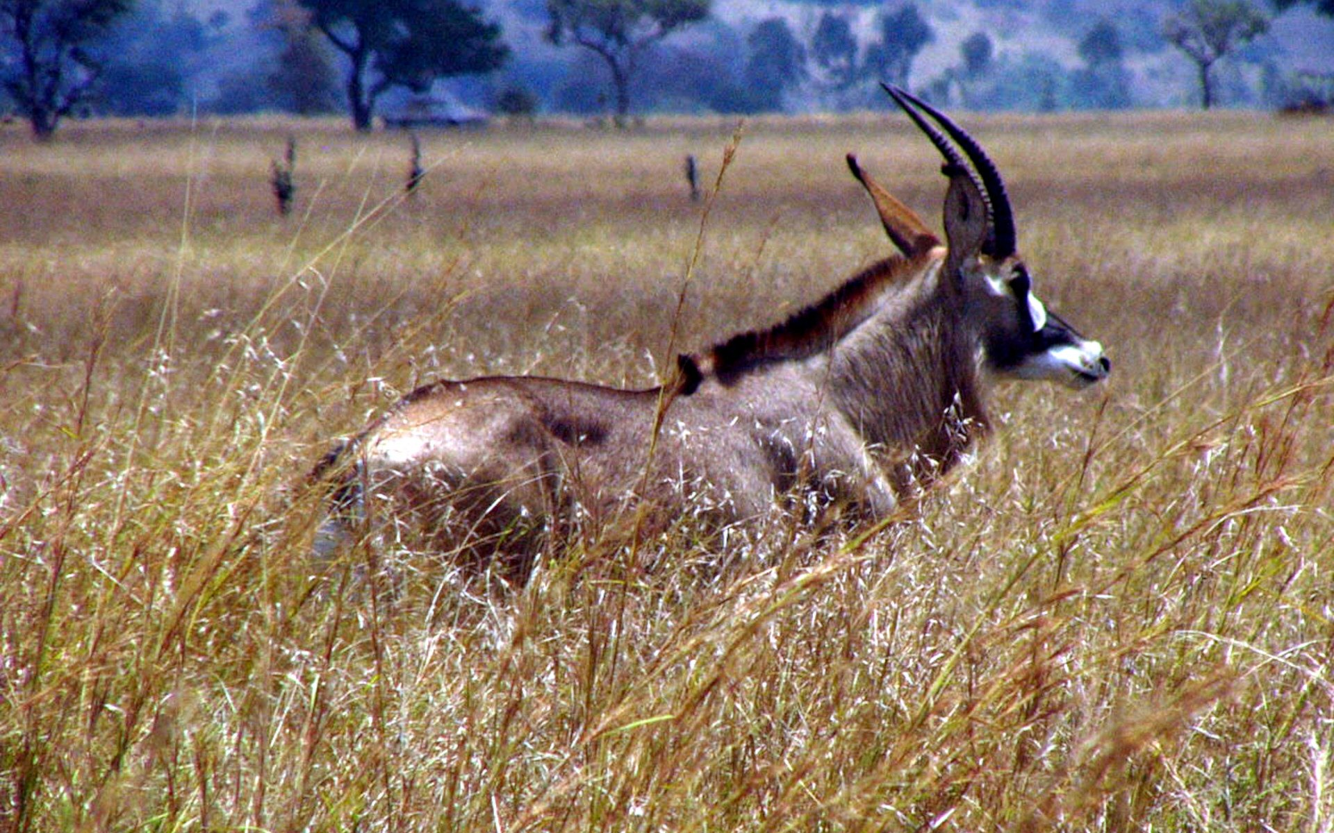 Ruma National Park is the last remaining sanctuary for the only indigenous population of the rare roan antelope in Kenya. Here are three things you can do.