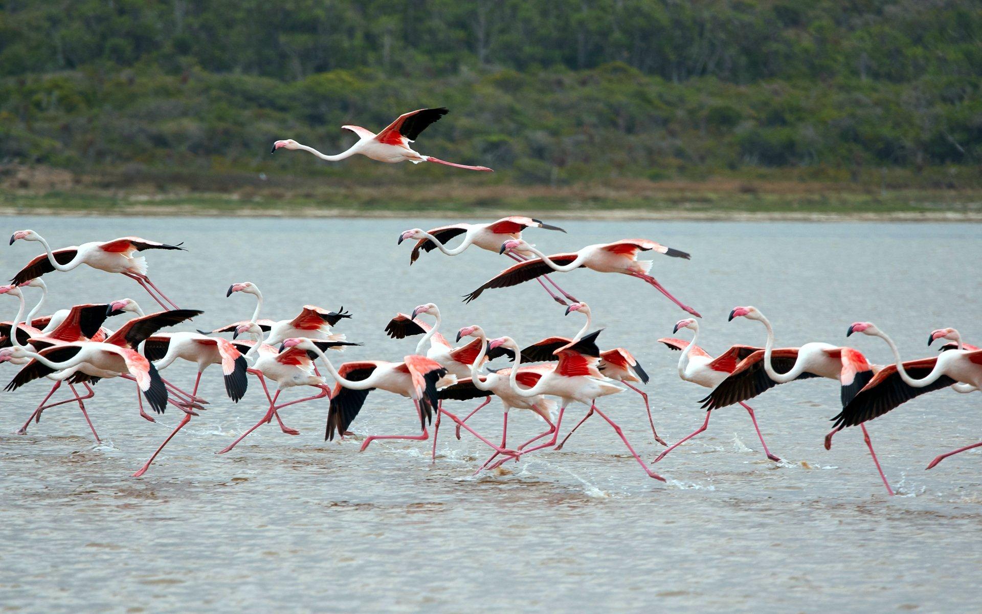 Lake Nakuru, with its fantastic flamboyance of flamingos nesting along the shores, forms the main highlight of a trip to Lake Nakuru National Park.
