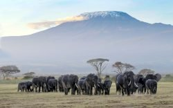 Amboseli National Park is a mix of swamps and plains dominated by the snow-capped Mount Kilimanjaro. Here are 5 things to do on a visit.