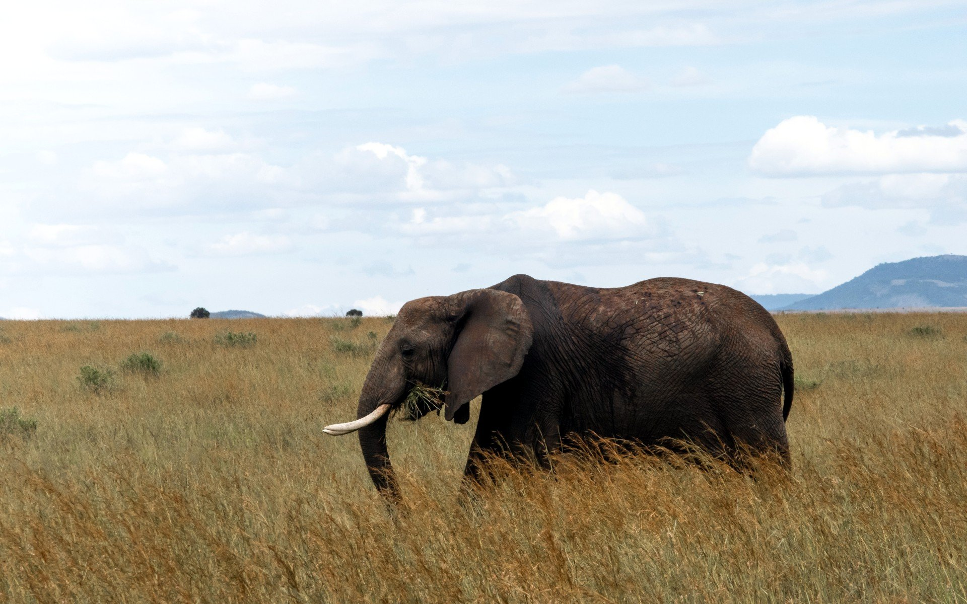 Places to spot Elephants: Himba Hills, Aberdare National Park, and Masai Mara National Park.