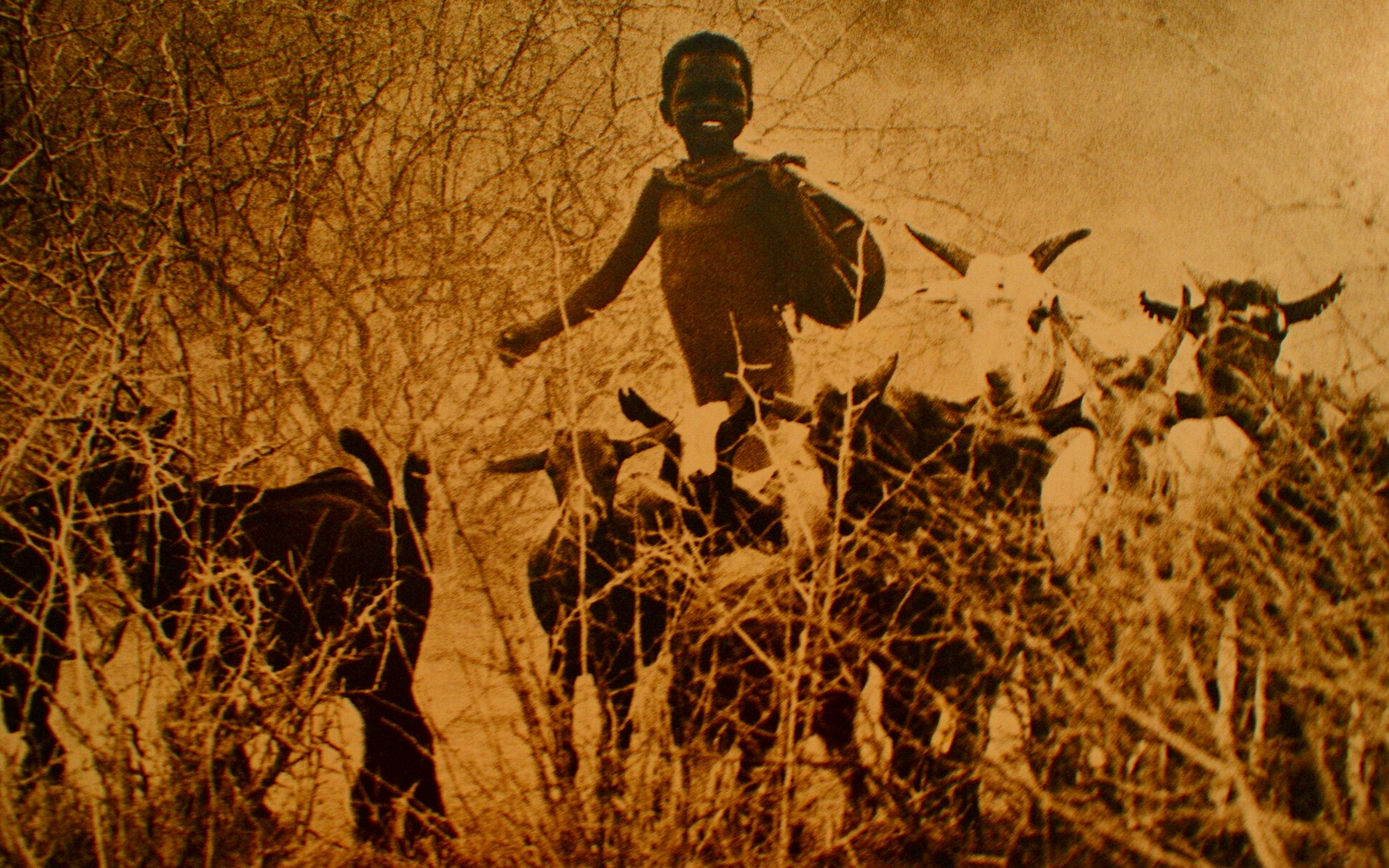 One of the photos at the cultural gallery of the Kapenguria Museum showing a Pokot boy Herding.