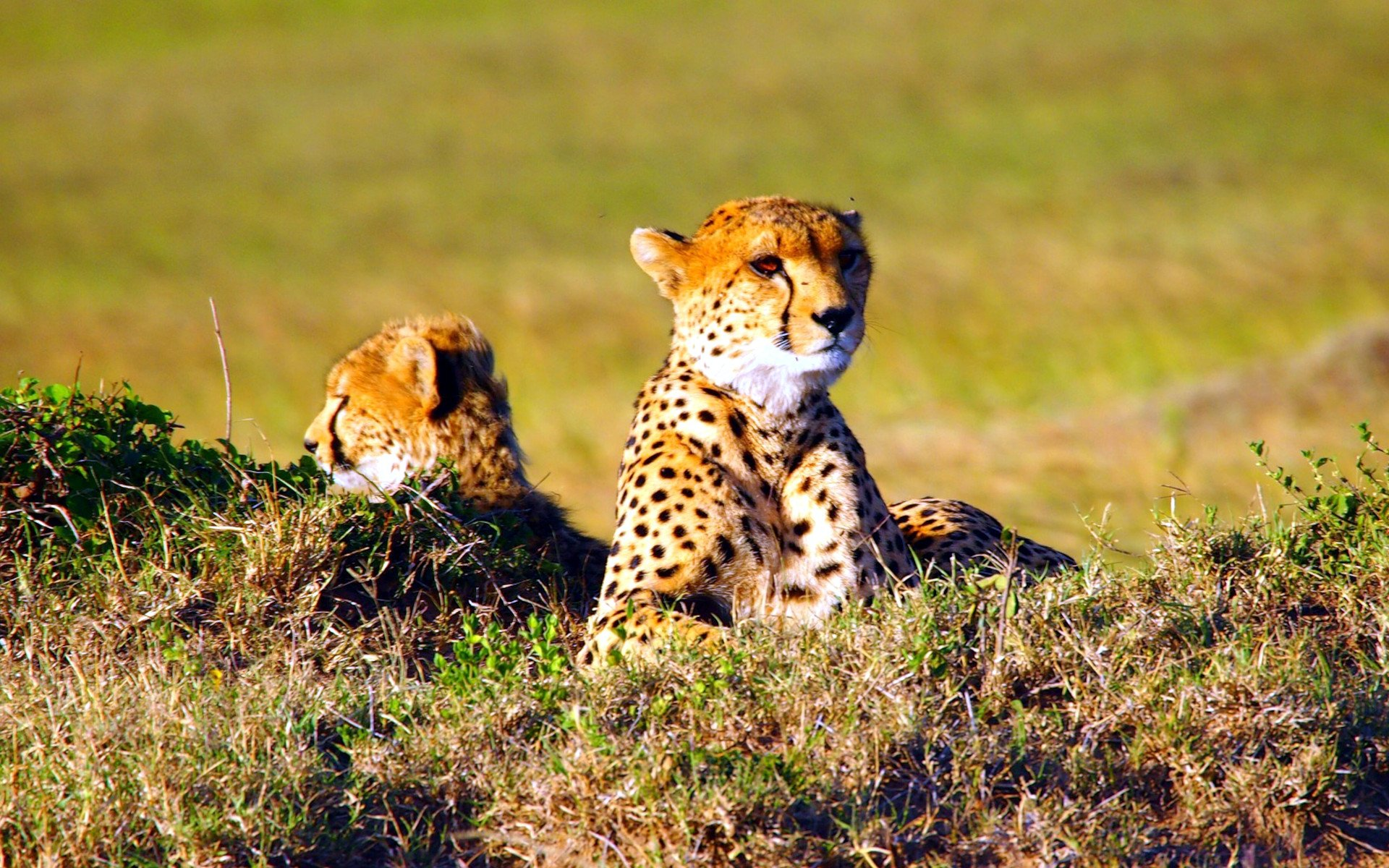 The high travel season in Kenya starts in January and ends in March. Suppose you are planning a safari with the end game of spotting the diversity of Kenya's wildlife. In that case, this is the season to plan your safari in.